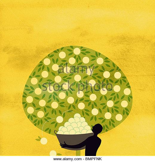 Man harvesting fruit from abundant tree - Stock-Bilder