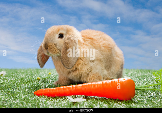 Rabbit with a carrot - Stock Image