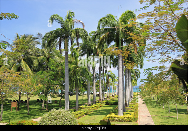 Avenue Of Palms Stock Photos Avenue Of Palms Stock