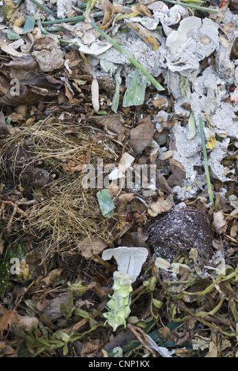 Shredded newspaper in compost?