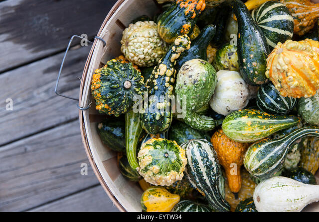 Fall vegetable basket with various squash and pumpkins - Stock Image