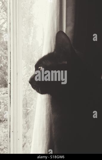 Window cat - Stock-Bilder