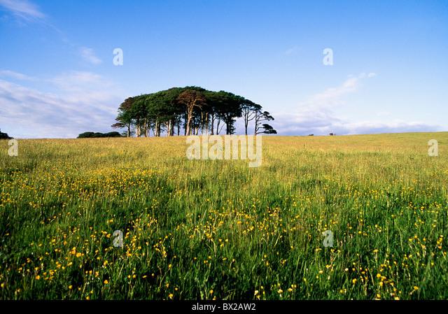 Killarney,Co Kerry,Ireland;Tree Outcrop In A Field Of Wildflowers - Stock-Bilder