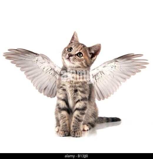 Angel kitten - Stock-Bilder