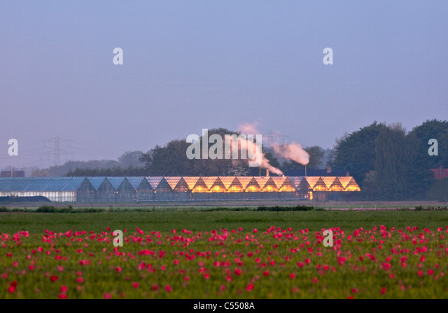 The Netherlands, Marknesse, Greenhouses for bulb  and flower culture - Stock-Bilder