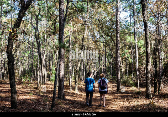 Gainesville Florida San Felasco Hammock State Park natural scenery nature trail pine forest trees teen boy girl - Stock Image