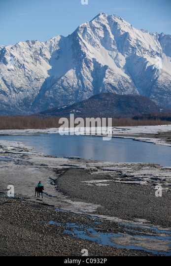 A horseback rider and its dogs trot along the icy shores of Knik River near Palmer, Matanuska-Susitna Valley, Alaska - Stock Image