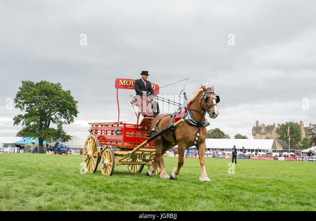 Heavy Horse Turnouts - Clydesdale Horse from Mouland Clydesdales pulling bottle dray at the Royal Highland Show - Stock Image