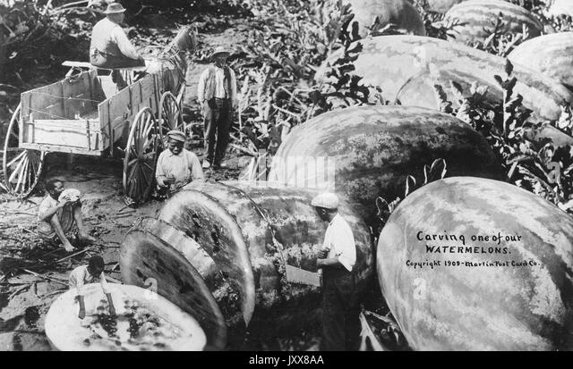A group of African American men harvest and carve over-sized watermelons in a field, while one man drives an wagon - Stock Image