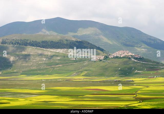Wild flowers leading up  to Caselluccio in the Piano Grande ,Sibillini National Park,Le Marche Italy - Stock Image
