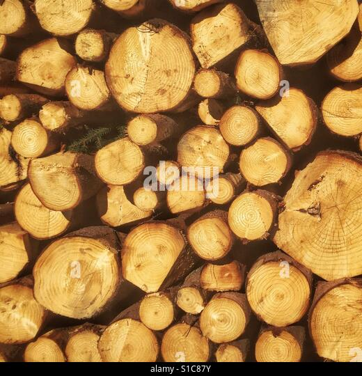 Logs captured enjoying the spring walking in the forest. - Stock-Bilder
