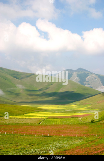 Wild flower display in front of Castelluccio  on the Piano Grande ,Sibillini National Park,Le Marche Italy - Stock Image