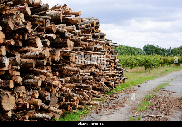 Piles of logs ready for firewood alongside an English country lane - Stock Image