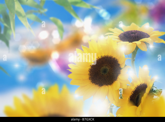 Atmosphere of Summer - Stock Image