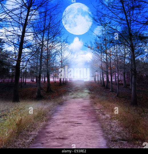 Full Moon And Woods.Digital Painting - Stock Image