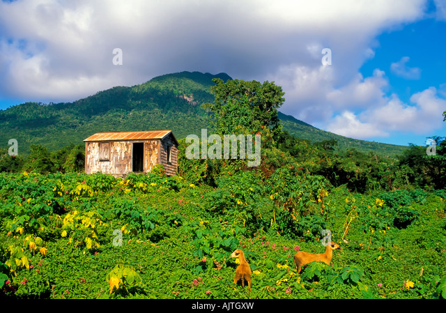 Island of Nevis St Kitts and Nevis Caribbean  old nevisian building architecture - Stock Image