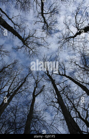 tree trees firmament - Stock Image