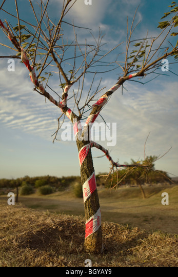 Tree wrapped with safety tape - Stock-Bilder