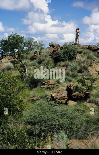 Scene of game scout on hill looking for animals with binoculars Namibia backgrounds hunting safari backgrounds Africa - Stock Image
