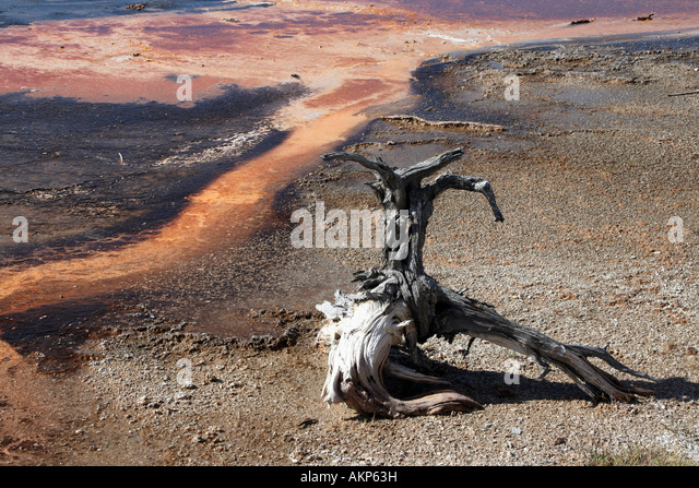 Deadwood on colourful runoff stream near Sapphire Pool, Biscuit Geyser Basin, Yellowstone National Park - Stock Image