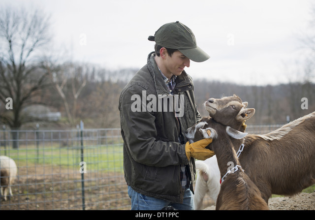 Dairy Farm Farmer working and tending to the animals - Stock-Bilder