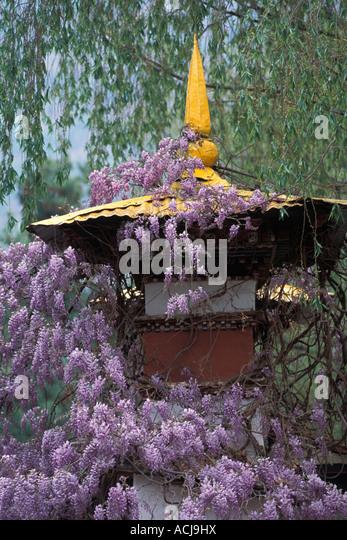 Spring flowers growing on palace gate, Paro town, Kingdom of Bhutan - Stock Image