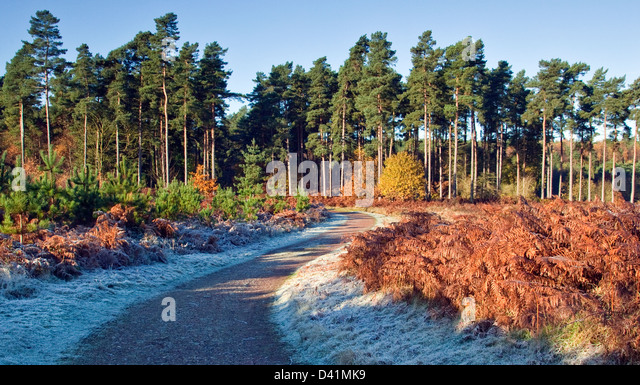 Stunning autumnal hues tints and colour from woodlands and forests on Cannock Chase Area of Oustanding Natural Beauty - Stock-Bilder