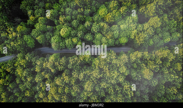 Overhead aerial view of road between green trees, Naestved, Denmark - Stock-Bilder
