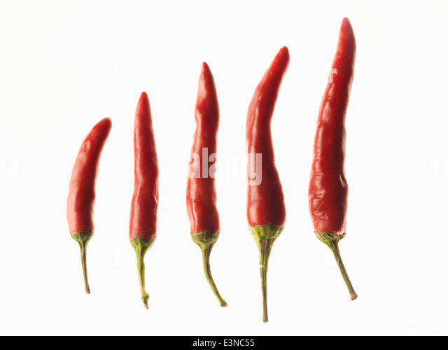 Red chilies in the order of size over white background - Stock Image