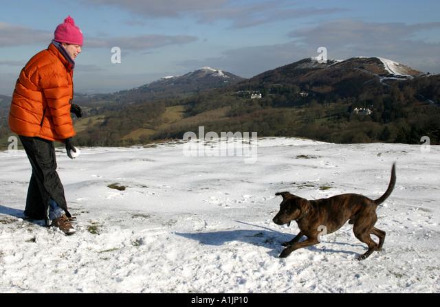Dog Walking In Musselburgh