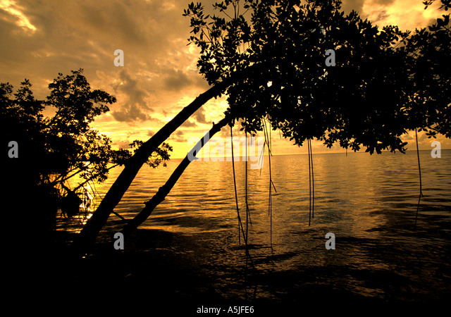 Florida Everglades National Park mangrove hanging over water at sunrise - Stock Image