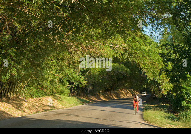 Jamaica St Elisabeth Bamboo Avenue 2 1 2 miles long Bamboo trees overgrowing the road like a tunnel - Stock Image