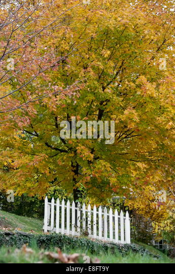 White fence and autumn leafs - Stock Image
