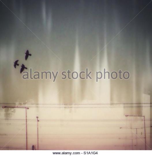 Fly away II - Stock Image