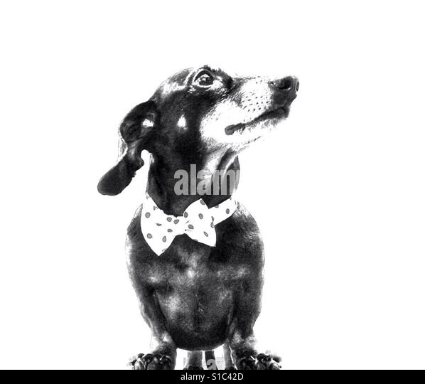 Cute doggy - Stock-Bilder