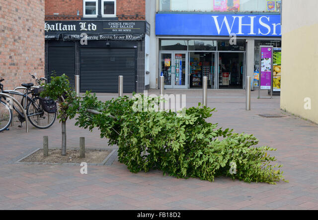 Tree pulled down by vandals, Beeston, Nottingham, England. - Stock Image