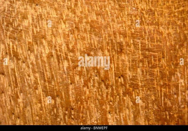 Structure of the hardened most ancient mahogany found in Saravak. Malaysia. Borneo - Stock-Bilder