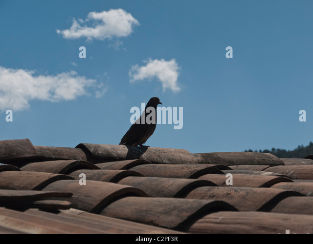A pigeon sits on a tile roof top of a house in Totonicapan, Guatemala. - Stock Image
