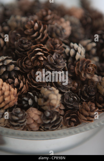 Collection of small pine cones in a bowl. - Stock Image