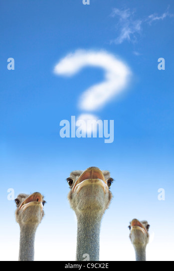 question and thinking concept. ostrich watching question mark - Stock-Bilder