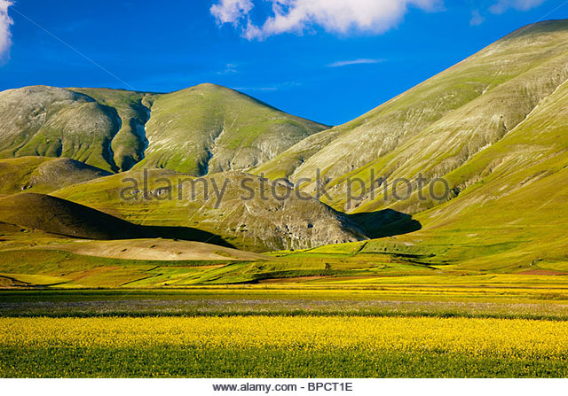 Wildflowers at the foot of the mountains of the Piano Grande in Monti Sibillini National Park, Umbria Italy - Stock-Bilder