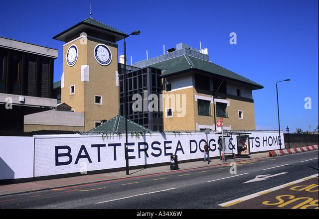 Battersea Dogs Home In Birmingham