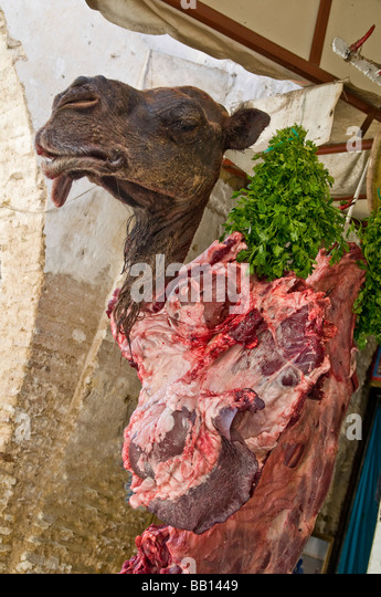 Severed camel head advertising camel meat for sale at butcher's shop in the medina of Fez in Morocco - Stock Image