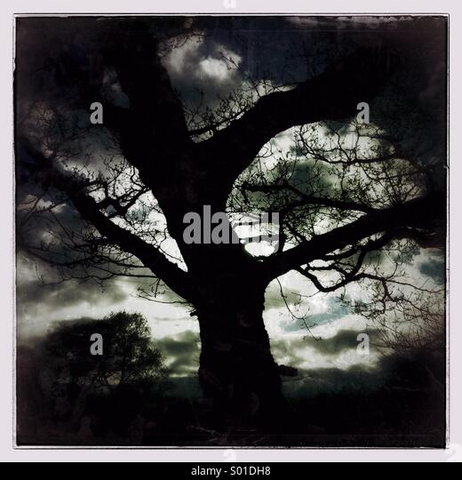 Dark moody tree against a dramatic sky - Stock Image