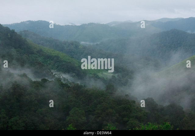 Early morning misty mountain at gavi ecotourism kerala stock image