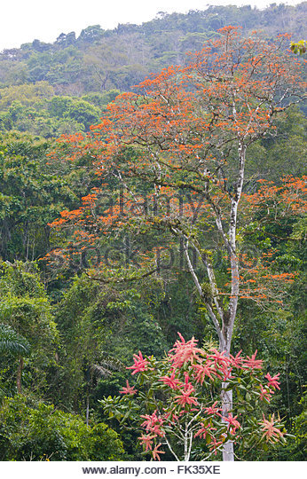 Rain forest at Cana in the Darien national park, Republic of Panama. - Stock-Bilder