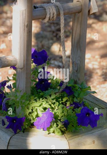 Municipal Hanging Flower Baskets : Petunias blue stock photos images