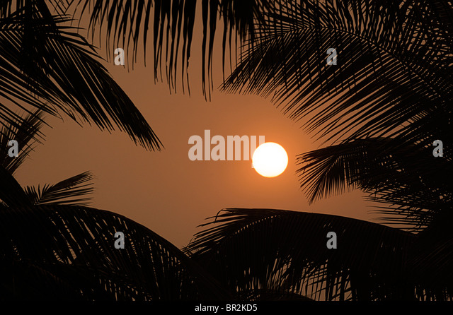 Sun, golden sky and silhouetted palm trees. Indian sunset - Stock-Bilder