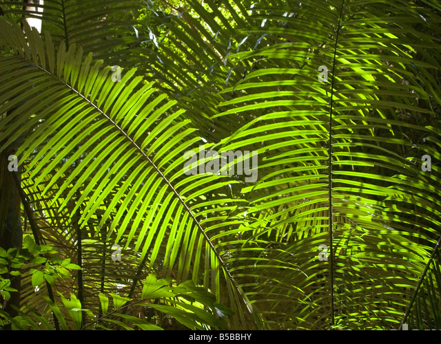fern lit up by sunlight in the jungle in Krabi Thailand - Stock-Bilder