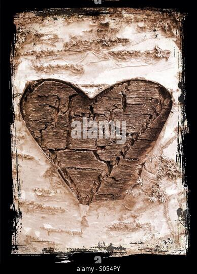 A heart cut to a birch tree - Stock Image